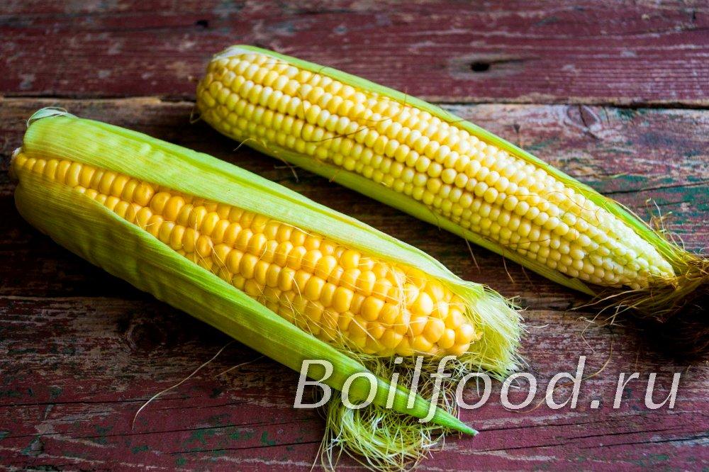 как отличить сахарную кукурузу от кормовой